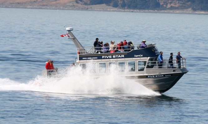 Five Star Whale Watching Boat